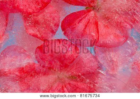 Frozen Flora