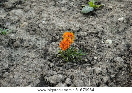 orange flower on soil