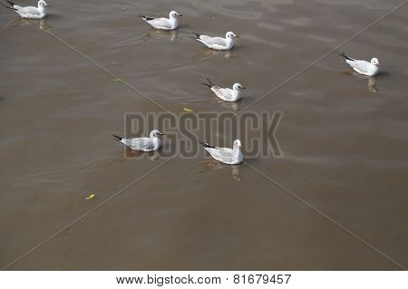 Seagull Swimming On The Sea
