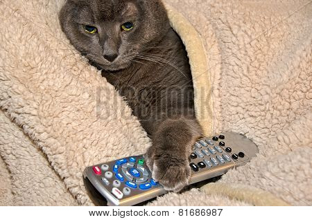 domestic cat with tv remote control