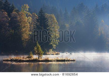 foggy morning on a wild bog, Vosges, France