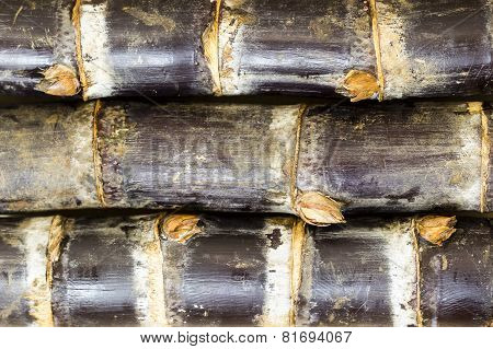 closeup of closely piled sugarcane shoots background