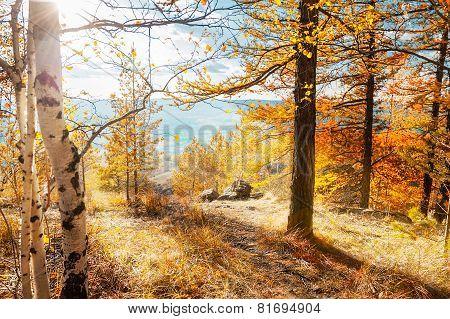 Autumn Landscape. Fall Scene