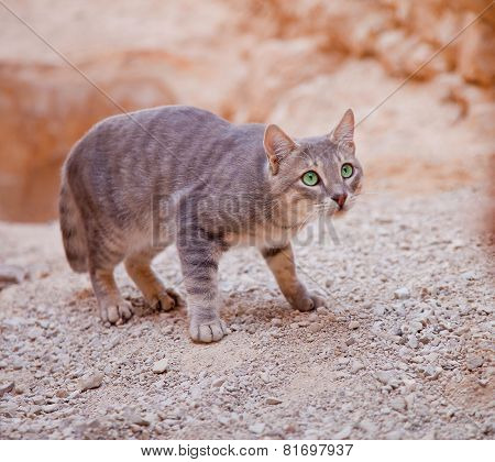 Cat Ready To Catch