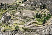 picture of mile  - Canyon of the Colca River in southern Peru - JPG