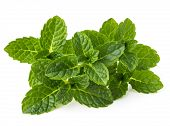 stock photo of mint leaf  - Fresh mint herb leaves isolated on white background cutout - JPG