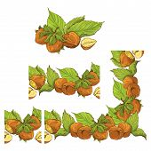 pic of hazelnut tree  - Rectangular frame ornament with highly detailed hand drawn hazelnuts isolated on white background - JPG