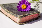 stock photo of holy-bible  - Old Holy Bible with violet flower - JPG