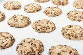 picture of baked raisin cookies  - Homemade chocolate chip cookie just baked on a tray - JPG