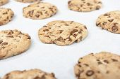 image of baked raisin cookies  - Homemade chocolate chip cookie just baked on a tray - JPG