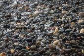 stock photo of under sea  - A large number of wet sea pebbles under sea wave - JPG