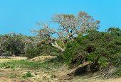 pic of jungle exotic  - Exotic nature in the jungles of Sri Lanka - JPG