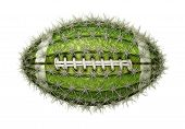 Cactus Football poster