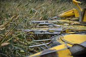image of maize  - Detail of cutters on combine harvester as farmers harvest a crop of maize for silage on a dairy farm in Westland New Zealand - JPG