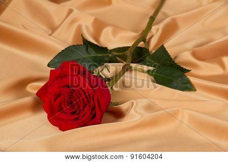 Rose on golden cloth