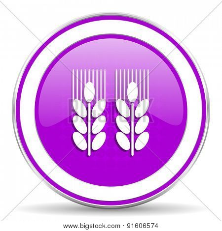agricultural violet icon