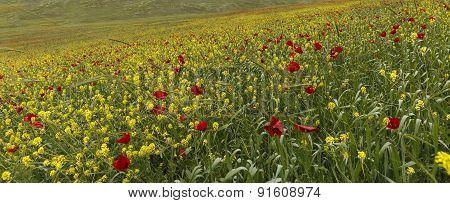 Poppy Field.ismaillinskie Mountains. Azerbaijan