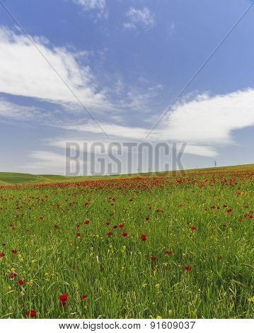 Poppy Field.ismailli. Mountains. Azerbaijan