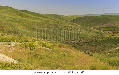 Grazing Cows In The Mountains Of Gobustan(azerbaijan)