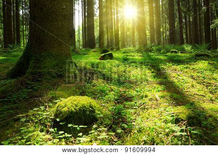 Spring Forest And Sunshine.