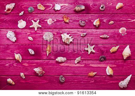 Big Set Of Sea Shells
