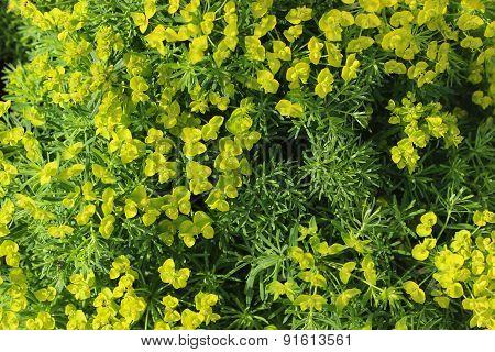Background Plant