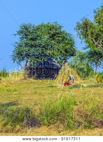 An Agricultural Worker Builds A New Straw Bale Construction