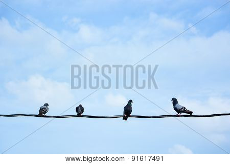 Group Of Birds On Wire