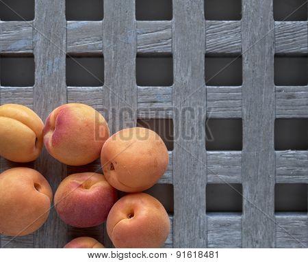 Apricot, Apricots