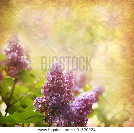 old paper background with  lilac flowers