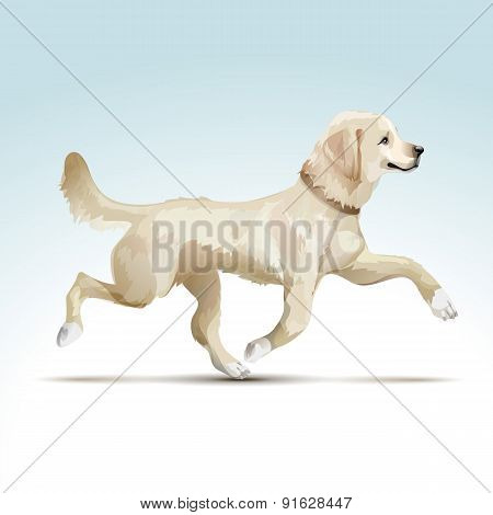 Vector Labrador Retriever Dog