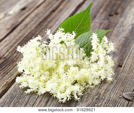Elder flowers on a wooden background