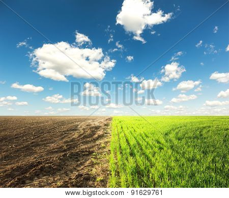 The field where one part with grass and second with ground and blue sky