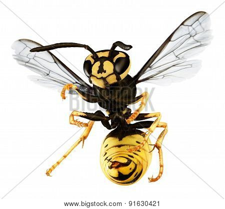 Hornet Isolated On A White Back Ground