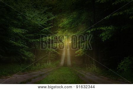 beautiful road in the woods