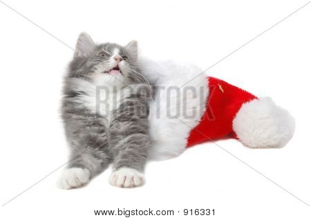 Intrigued Cute Christmas Kitten