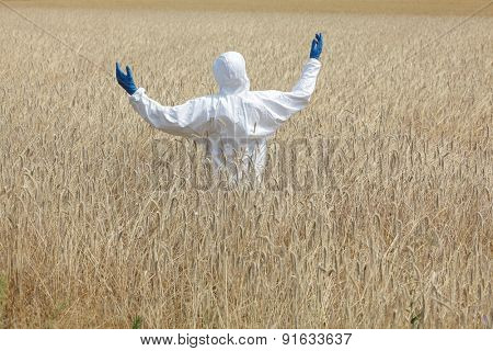 agricultural engineer on field of field of rye  back view