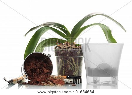 Garden tools and orchid