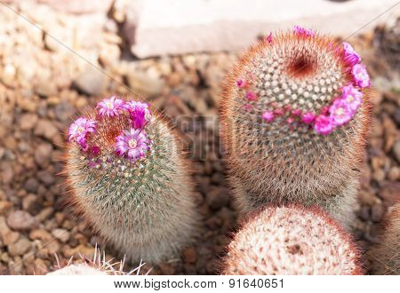Thermal Plants Cactus Plant Group