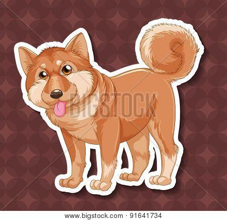 Closeup shiba dog on circles background