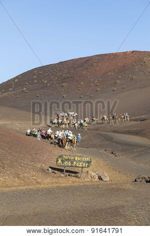 Tourists Ride On Camels Being Guided By Local People