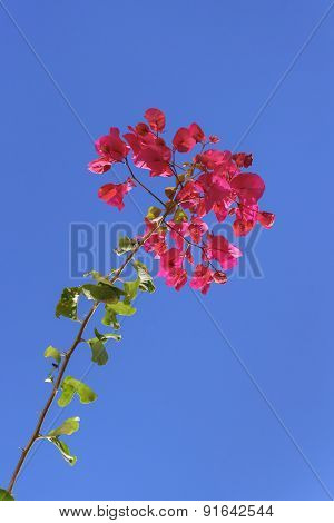 Red Flowers And Sky