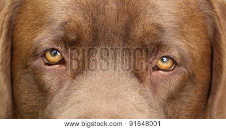 DOG, eyes expression