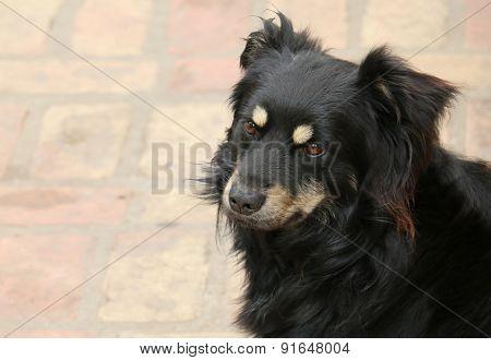 Cute black terrier dog