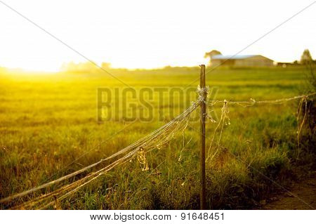 Fantastic Grass Field At The Sunset Closeup View