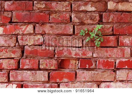 Texture Of The Old Dirty Red Brick Wall