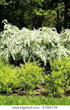 Flowering bushes in park