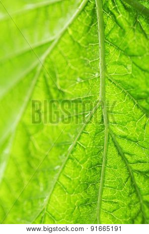 Close up of fresh green leaf with veins