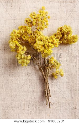 Beautiful dry flowers on fabric background