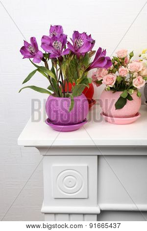 Beautiful flowers in pots on light background